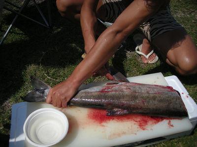 鮭のさばき方 腹を割いて白子か筋子を取り出す